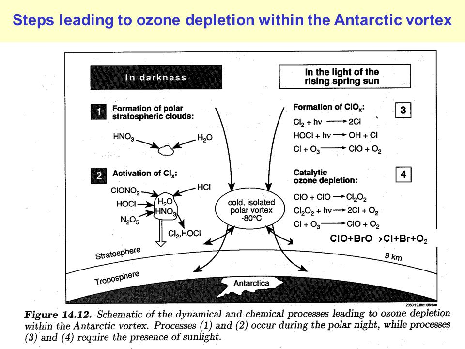 Steps leading to ozone depletion within the Antarctic vortex ClO+BrO  Cl+Br+O 2