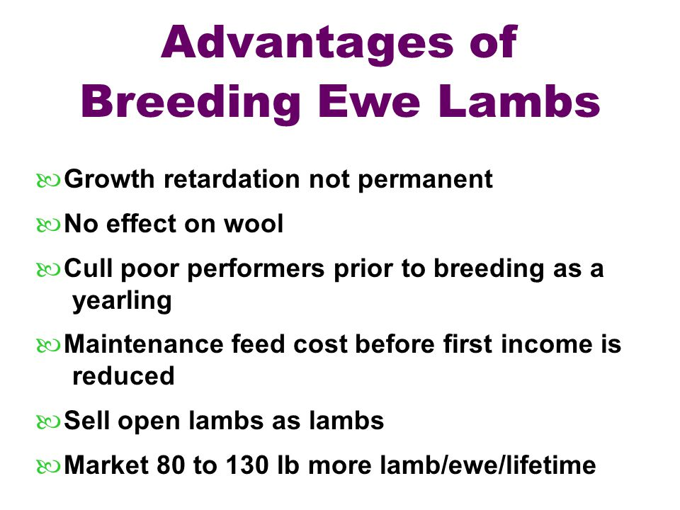 Advantages of Breeding Ewe Lambs — Growth retardation not permanent — No effect on wool — Cull poor performers prior to breeding as a yearling — Maint