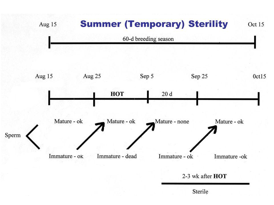 Summer (Temporary) Sterility