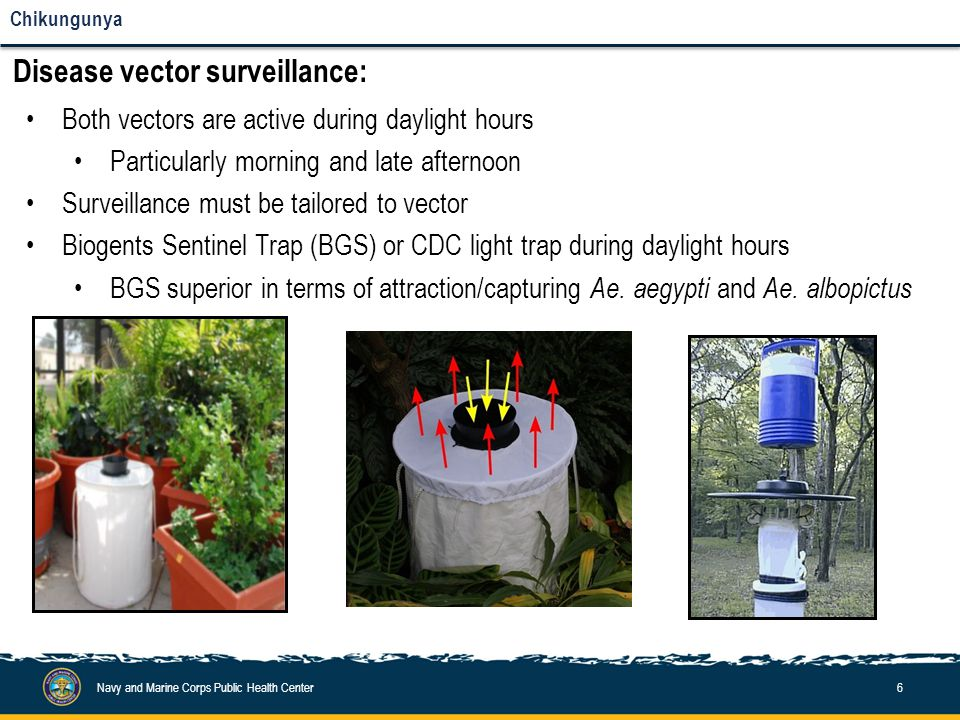 Navy and Marine Corps Public Health Center6 Chikungunya Disease vector surveillance: Both vectors are active during daylight hours Particularly mornin