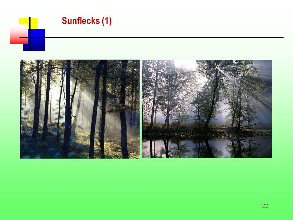 22 Sunflecks (1)