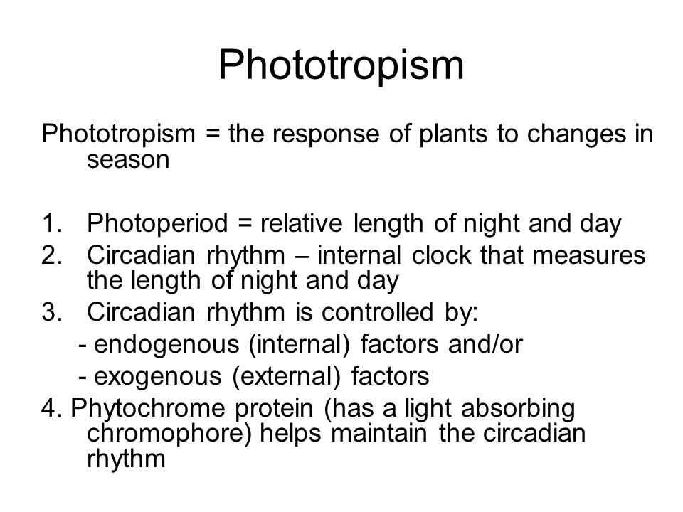 Phototropism Phototropism = the response of plants to changes in season 1.Photoperiod = relative length of night and day 2.Circadian rhythm – internal