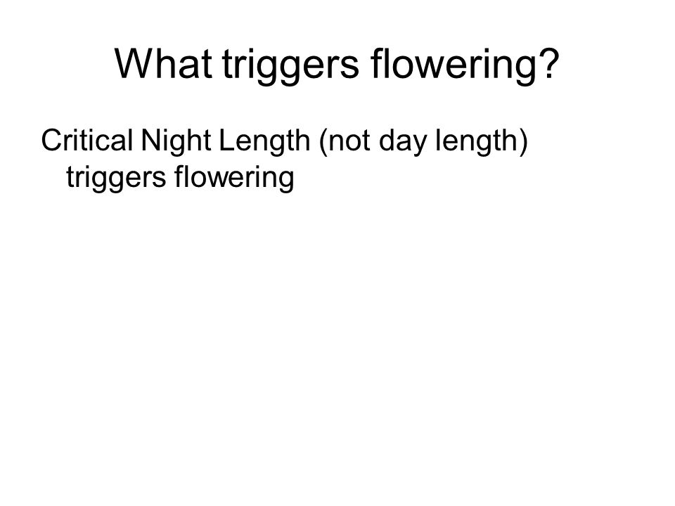 What triggers flowering? Critical Night Length (not day length) triggers flowering