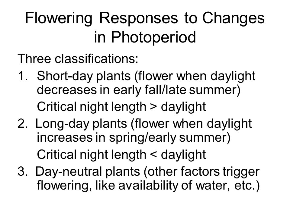 Flowering Responses to Changes in Photoperiod Three classifications: 1.Short-day plants (flower when daylight decreases in early fall/late summer) Cri