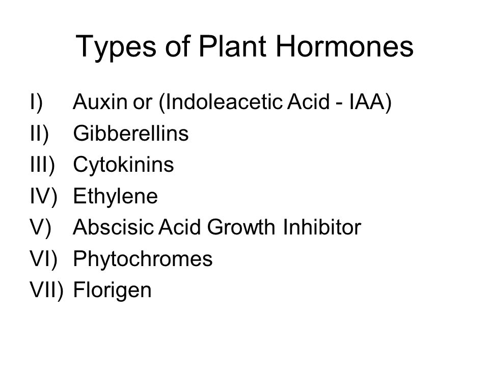 Auxin (Indoleacetic Acid or IAA) Auxin = Hormone that promotes elongation in parts of cells Produced in apical meristem of shoots and transported to areas in the plant where cell elongation is needed