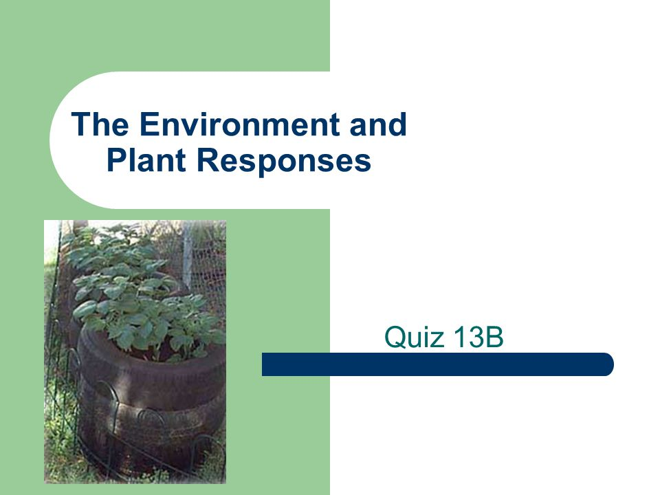 The Environment and Plant Responses Quiz 13B