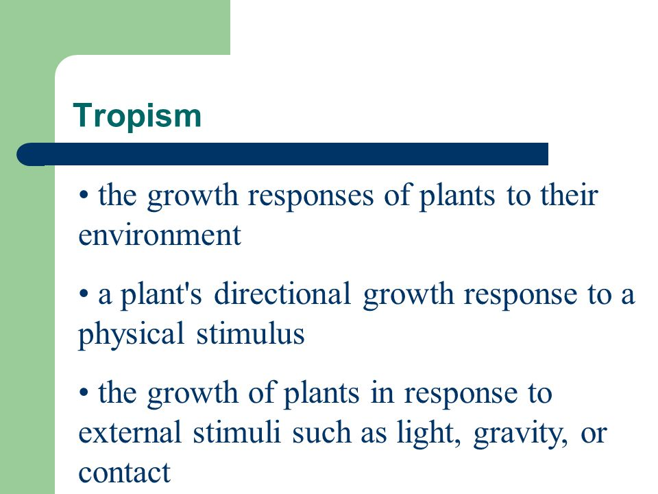 Tropism the growth responses of plants to their environment a plant's directional growth response to a physical stimulus the growth of plants in respo