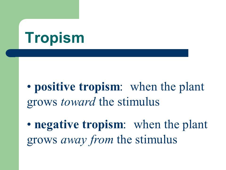 Tropism positive tropism: when the plant grows toward the stimulus negative tropism: when the plant grows away from the stimulus