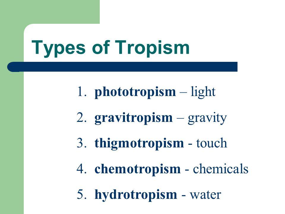 Types of Tropism 1. phototropism – light 2. gravitropism – gravity 3. thigmotropism - touch 4. chemotropism - chemicals 5. hydrotropism - water