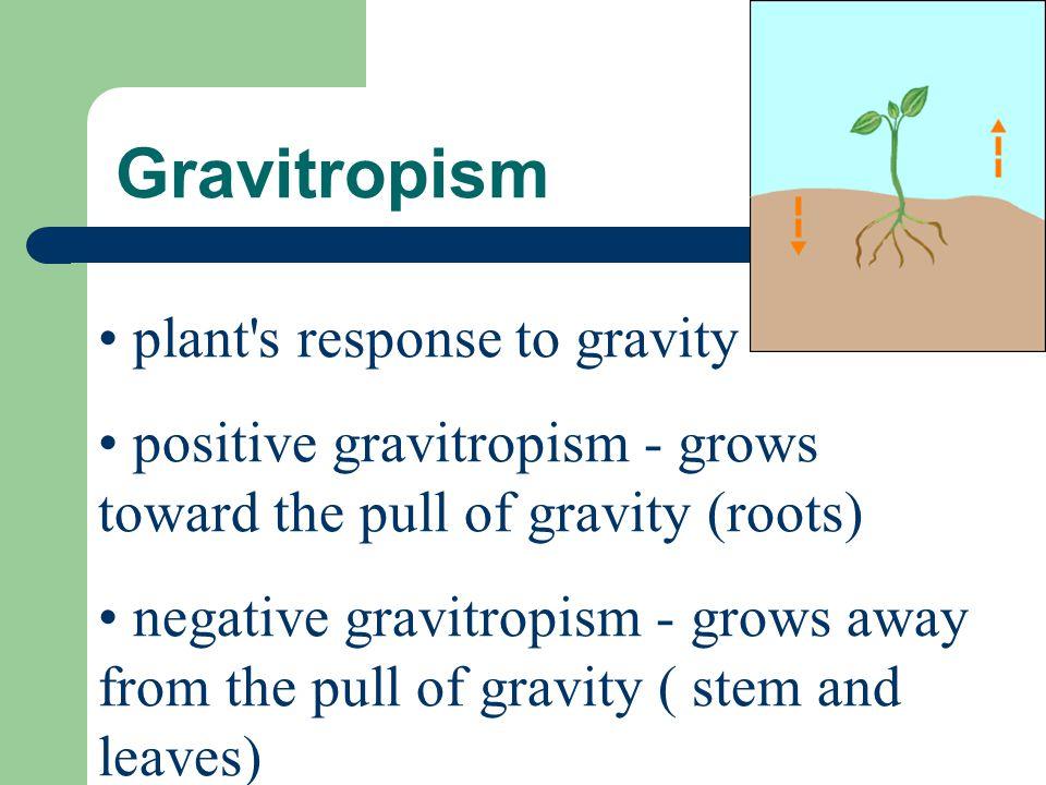 Gravitropism plant's response to gravity positive gravitropism - grows toward the pull of gravity (roots) negative gravitropism - grows away from the