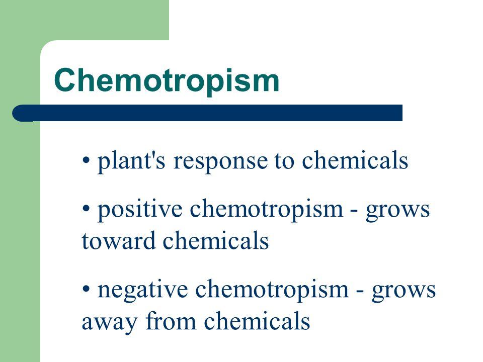 Chemotropism plant's response to chemicals positive chemotropism - grows toward chemicals negative chemotropism - grows away from chemicals
