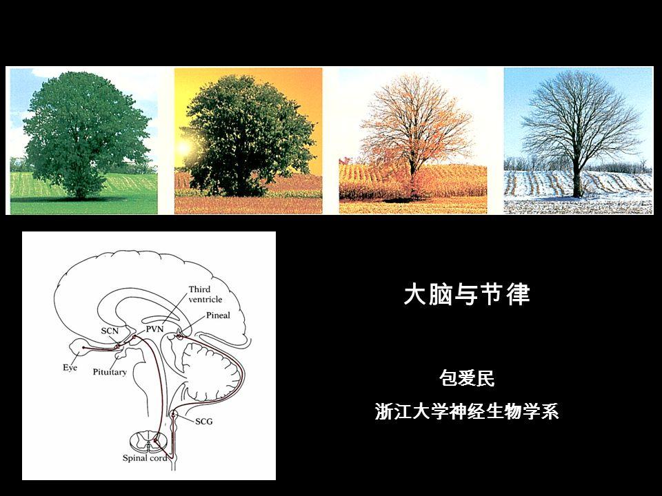 大脑与节律 包爱民 浙江大学神经生物学系