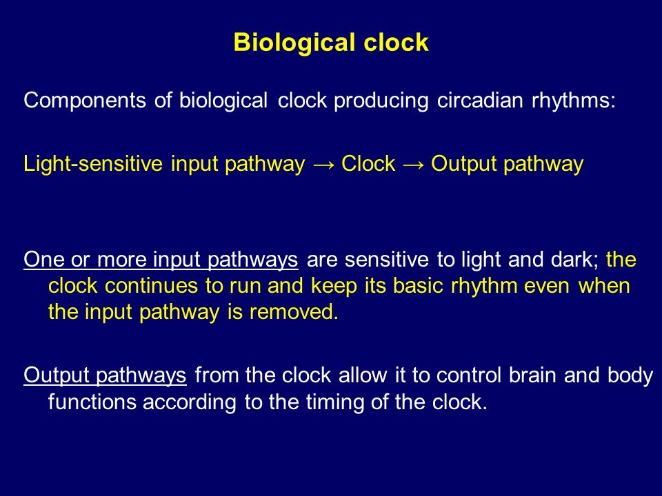 Biological clock Components of biological clock producing circadian rhythms: Light-sensitive input pathway → Clock → Output pathway One or more input pathways are sensitive to light and dark; the clock continues to run and keep its basic rhythm even when the input pathway is removed.