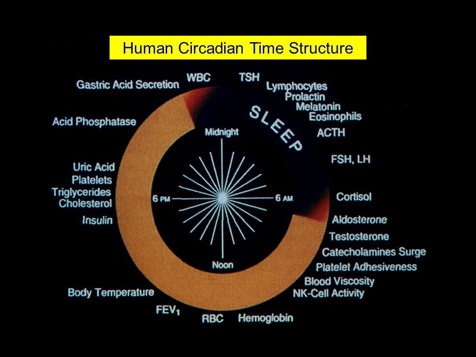 Human Circadian Time Structure