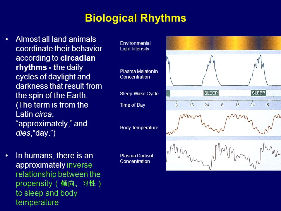 Types of Rhythms Circadian – fluctuate daily –Sleep-wake, temperature, hormones, urine production, gastrointestinal activity –Cognitive and motor performance levels Infradian – less than once a day –Hibernation, ovulation Ultradian – more than once a day –Sleep cycles (REM and other sleep stages)