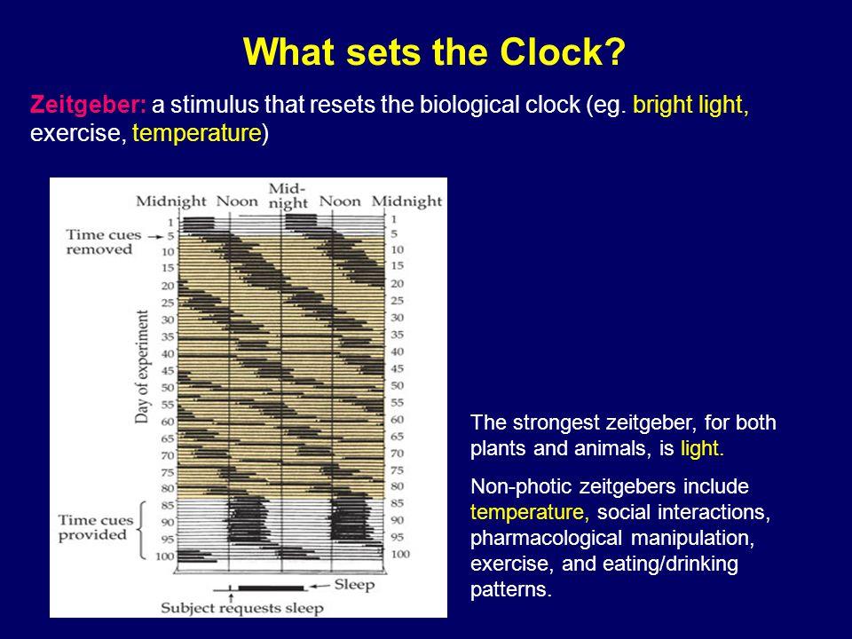 Biological clock Biological clock overrides ( 重写、无视 ) most environmental cues.