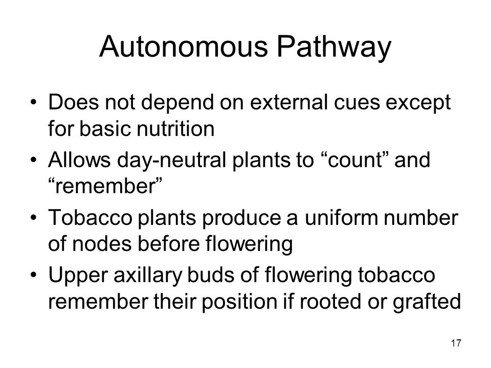 """Autonomous Pathway Does not depend on external cues except for basic nutrition Allows day-neutral plants to """"count"""" and """"remember"""" Tobacco plants prod"""
