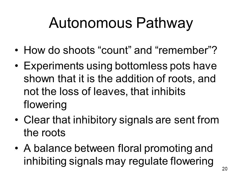 """Autonomous Pathway How do shoots """"count"""" and """"remember""""? Experiments using bottomless pots have shown that it is the addition of roots, and not the lo"""