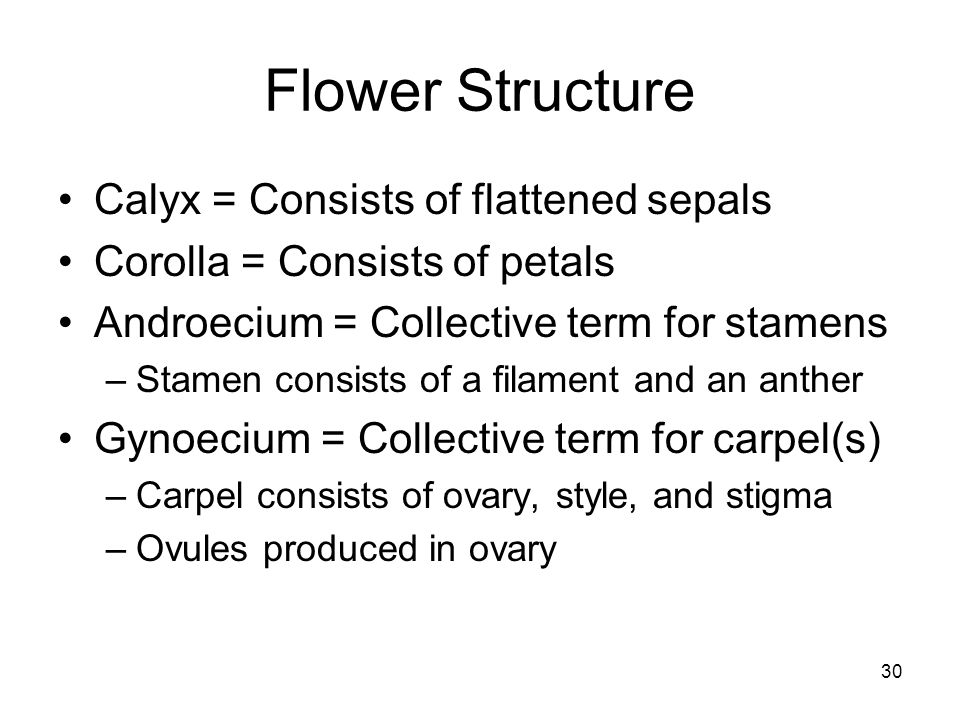 Flower Structure Calyx = Consists of flattened sepals Corolla = Consists of petals Androecium = Collective term for stamens –Stamen consists of a fila