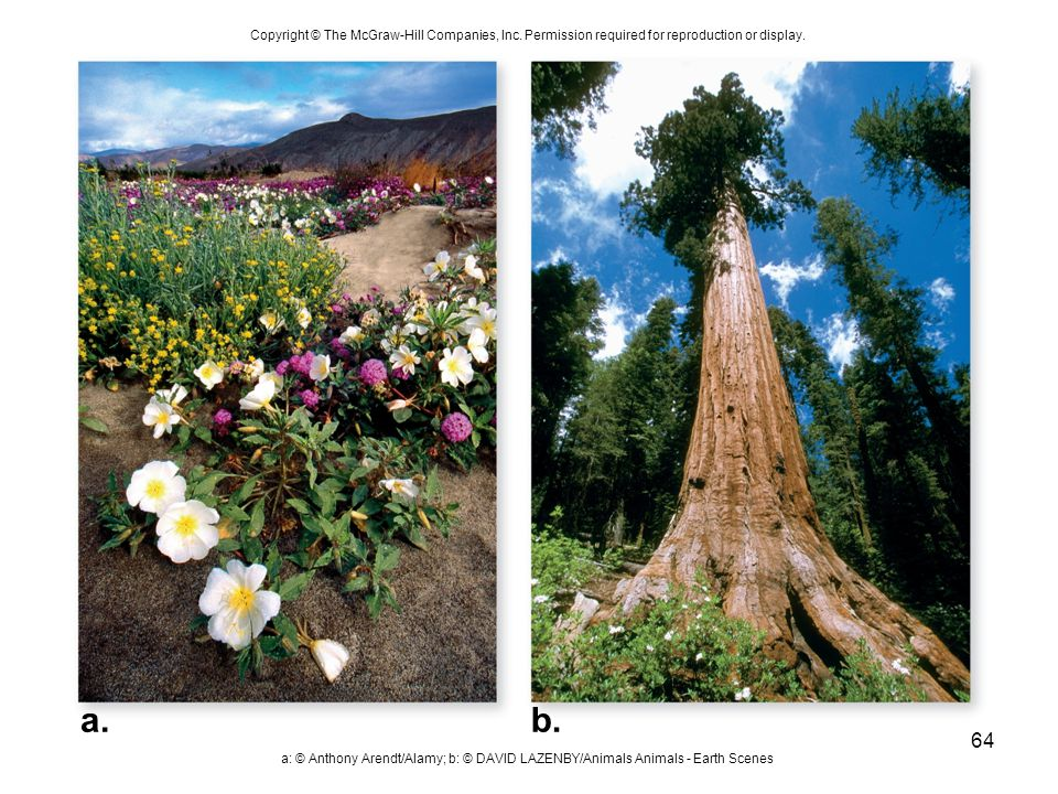 Copyright © The McGraw-Hill Companies, Inc. Permission required for reproduction or display. a: © Anthony Arendt/Alamy; b: © DAVID LAZENBY/Animals Ani
