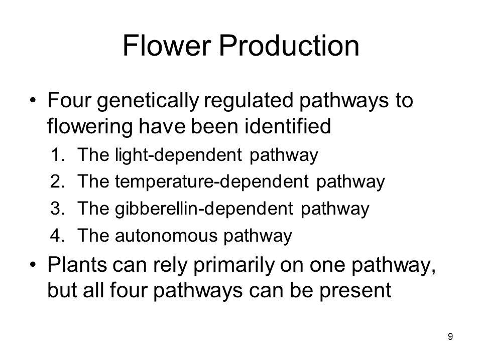 Light-Dependent Pathway Also termed the photoperiodic pathway Keyed to amount of dark in the daily 24-hr cycle (day length) Short-day plants flower when daylight becomes shorter than a critical length Long-day plants flower when daylight becomes longer Day-neutral plants flower when mature regardless of day length 10