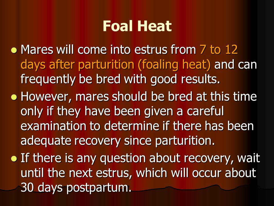 Foal Heat Mares will come into estrus from 7 to 12 days after parturition (foaling heat) and can frequently be bred with good results.