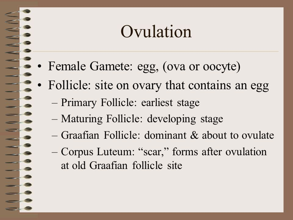 """Species Differences Sow: Convoluted uterine horns, corkscrew cervix Cow & Ewe: Prominent uterine horns. Cervical Rings Mare: Smooth cervix, """"ovulation"""
