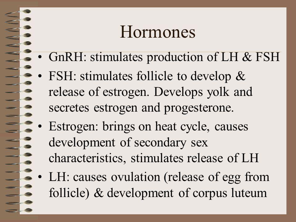 Ovulation, con't Oogenesis: –Development & production of eggs (ova) Monotocous: –non-litter bearing species; 1 dominant follicle Polytocous: –litter-b