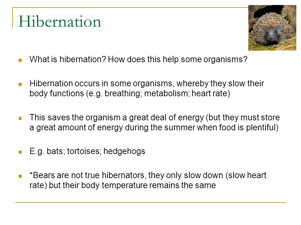 Hibernation What is hibernation. How does this help some organisms.
