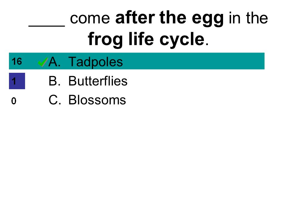 ____ come after the egg in the frog life cycle. A.Tadpoles B.Butterflies C.Blossoms