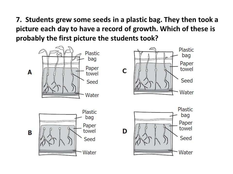 7. Students grew some seeds in a plastic bag. They then took a picture each day to have a record of growth. Which of these is probably the first pictu