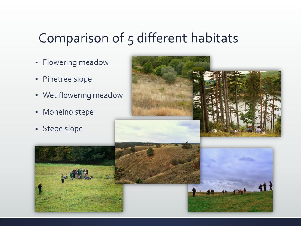 Comparison of 5 different habitats  Flowering meadow  Pinetree slope  Wet flowering meadow  Mohelno stepe  Stepe slope