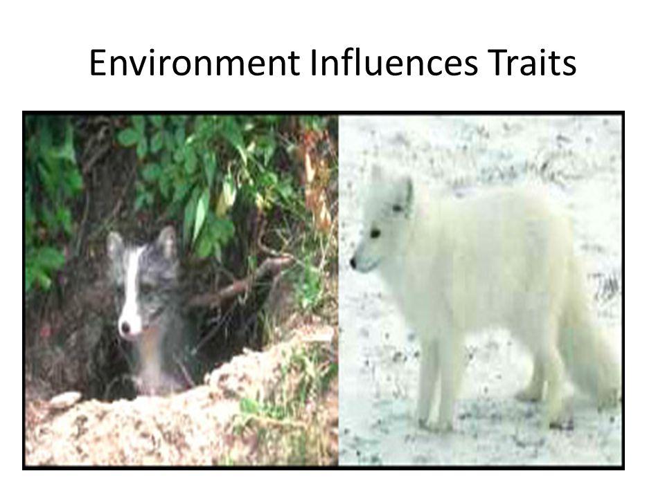 Environment Influences Traits