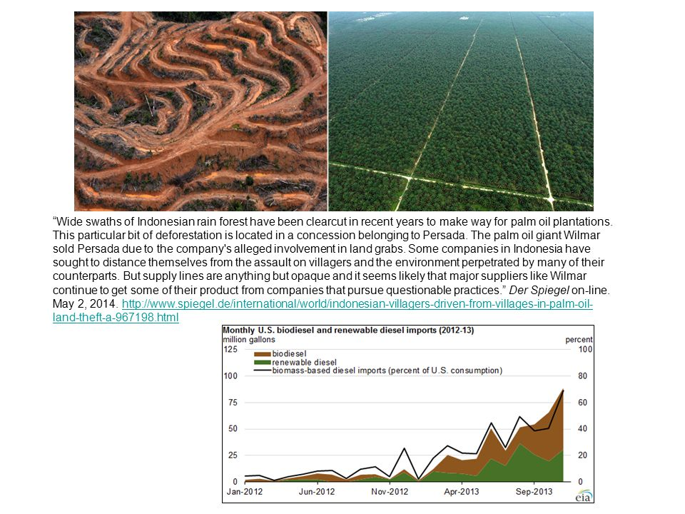 """""""Wide swaths of Indonesian rain forest have been clearcut in recent years to make way for palm oil plantations. This particular bit of deforestation i"""
