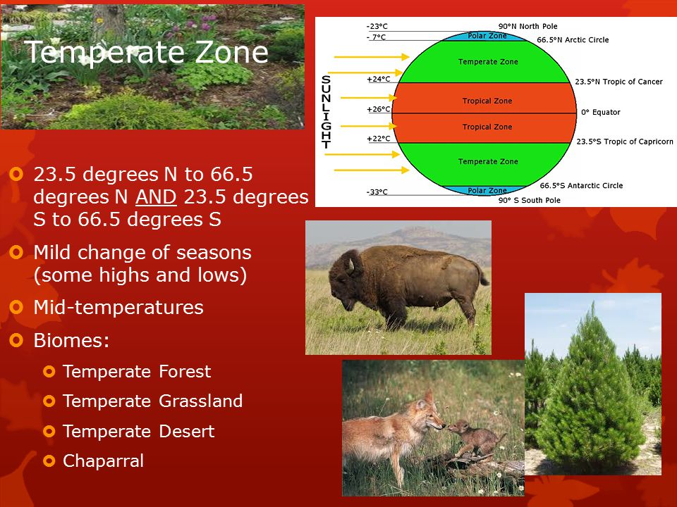 Temperate Zone  23.5 degrees N to 66.5 degrees N AND 23.5 degrees S to 66.5 degrees S  Mild change of seasons (some highs and lows)  Mid-temperatures  Biomes:  Temperate Forest  Temperate Grassland  Temperate Desert  Chaparral