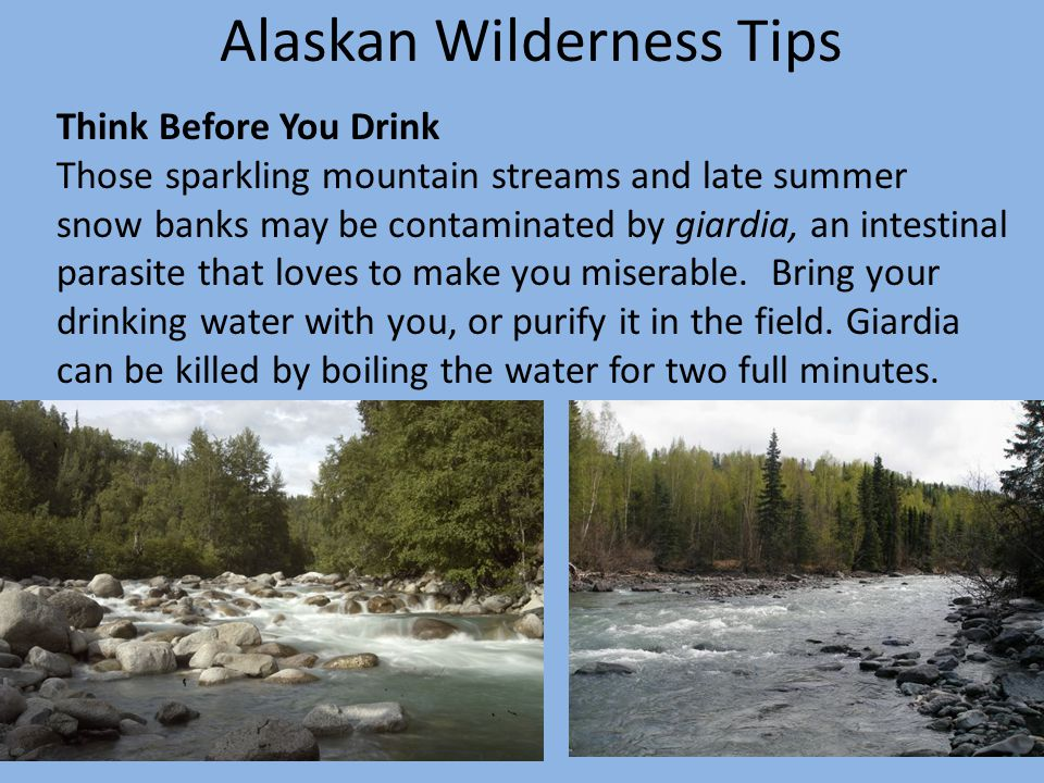 Alaskan Wilderness Tips Think Before You Drink Those sparkling mountain streams and late summer snow banks may be contaminated by giardia, an intestinal parasite that loves to make you miserable.
