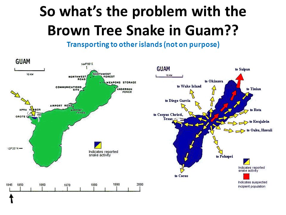 So what's the problem with the Brown Tree Snake in Guam .