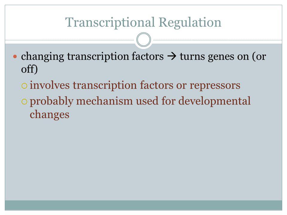 Transcriptional Regulation changing transcription factors  turns genes on (or off)  involves transcription factors or repressors  probably mechanis