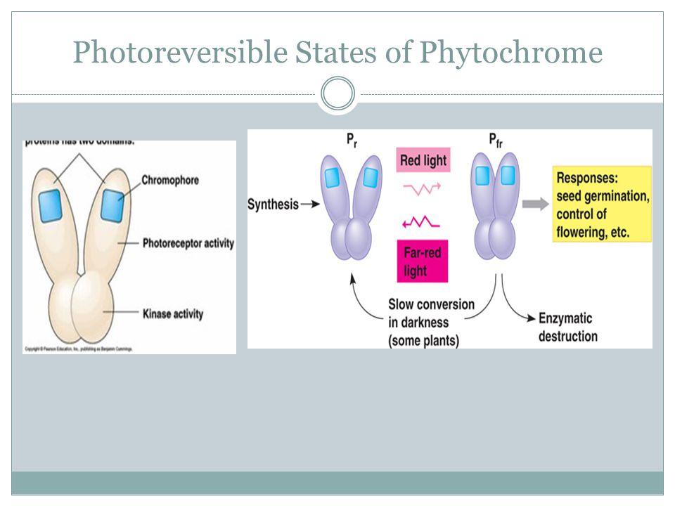 Photoreversible States of Phytochrome
