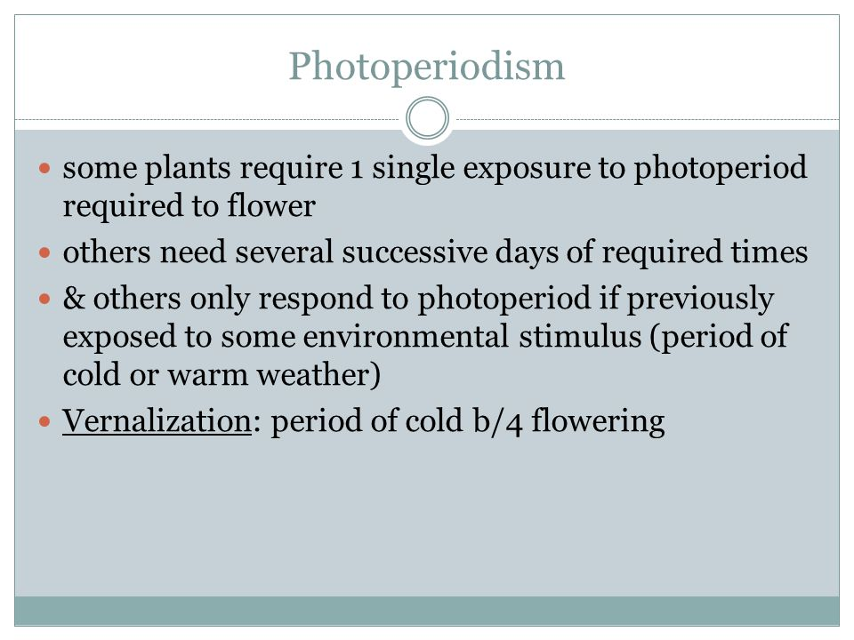 Photoperiodism some plants require 1 single exposure to photoperiod required to flower others need several successive days of required times & others