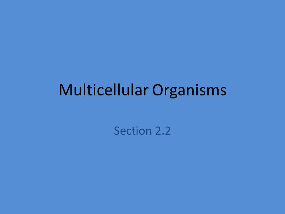 Multicellular Organisms Section 2.2