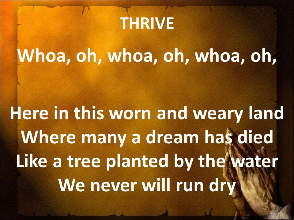 THRIVE Whoa, oh, whoa, oh, whoa, oh, Here in this worn and weary land Where many a dream has died Like a tree planted by the water We never will run d