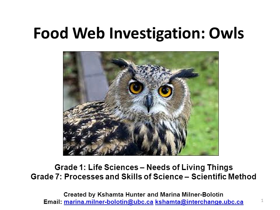 Food Web Investigation: Owls 1 Grade 1: Life Sciences – Needs of Living Things Grade 7: Processes and Skills of Science – Scientific Method Created by Kshamta Hunter and Marina Milner-Bolotin Email: marina.milner-bolotin@ubc.ca kshamta@interchange.ubc.camarina.milner-bolotin@ubc.cakshamta@interchange.ubc.ca