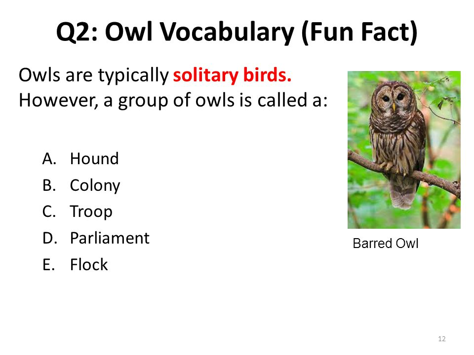 Q2: Owl Vocabulary (Fun Fact) Owls are typically solitary birds. However, a group of owls is called a: A.Hound B.Colony C.Troop D.Parliament E.Flock B
