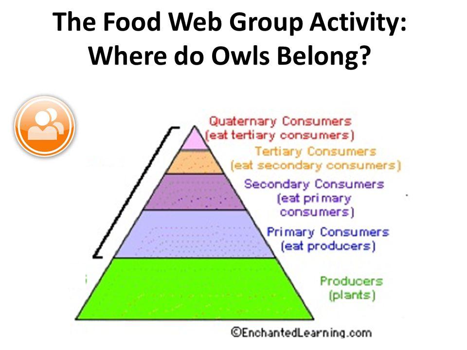 The Food Web Group Activity: Where do Owls Belong?
