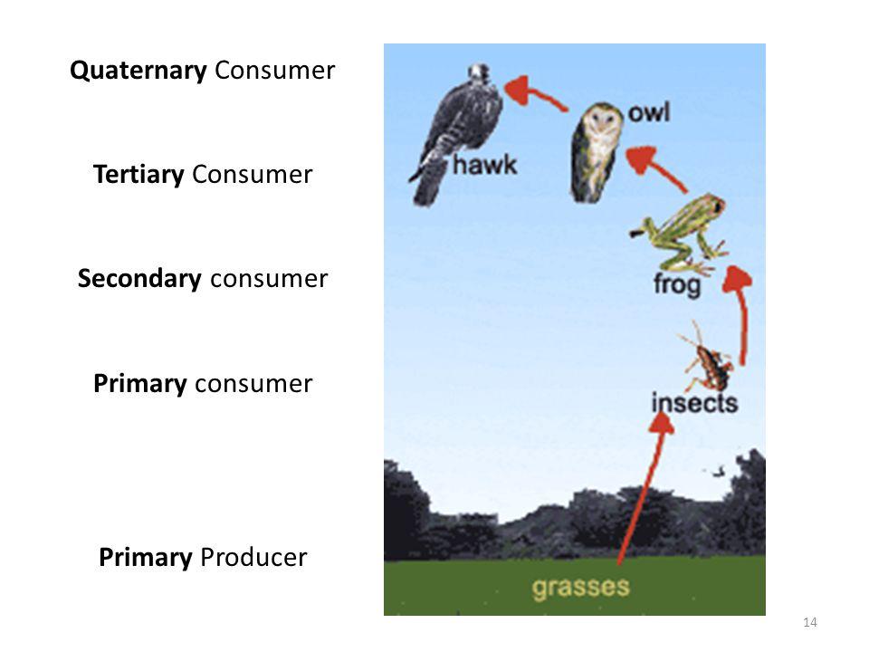 Quaternary Consumer Tertiary Consumer Secondary consumer Primary consumer Primary Producer 14