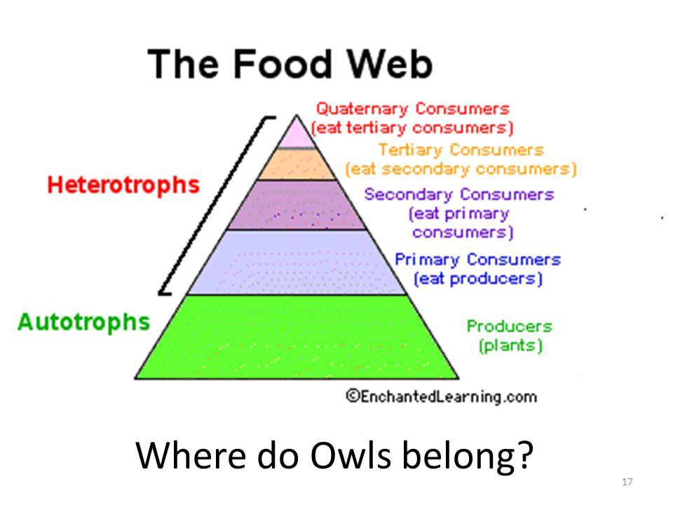 Where do Owls belong 17