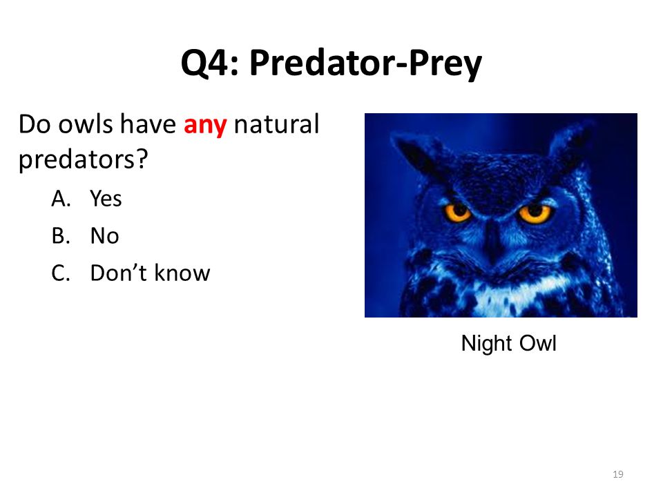 Q4: Predator-Prey Do owls have any natural predators A.Yes B.No C.Don't know Night Owl 19
