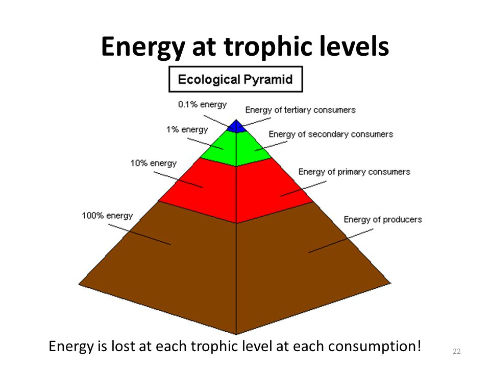 Energy at trophic levels Energy is lost at each trophic level at each consumption! 22