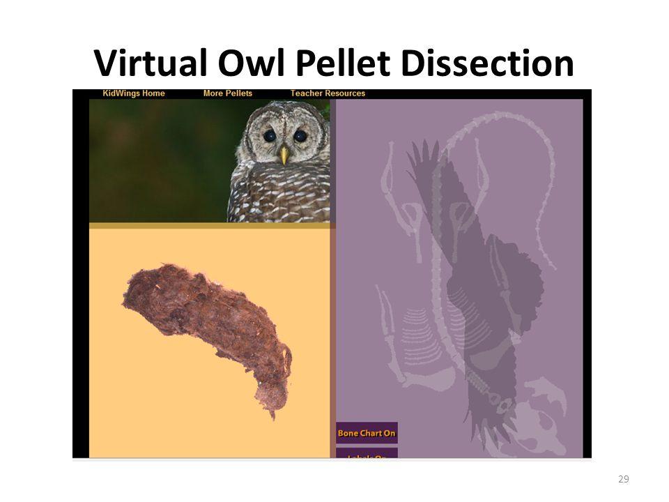 Virtual Owl Pellet Dissection 29